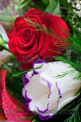 Weiße und rote Rosen | Foto mit hoher Auflösung |ID 3039380