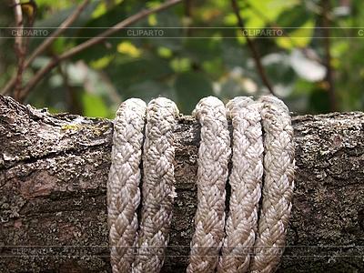Cuerda en brabch | Foto de alta resolución |ID 3072569