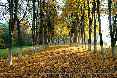 Sonniger Herbstabend | Foto mit hoher Auflösung |ID 3039694