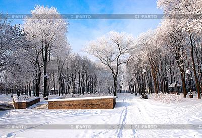 공원에서 아름 다운 나무를 고정   높은 해상도 사진  ID 3039780