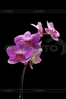 Orchid | High resolution stock photo |ID 3039832