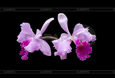 Violette Orchidee | Foto mit hoher Auflösung |ID 3039834