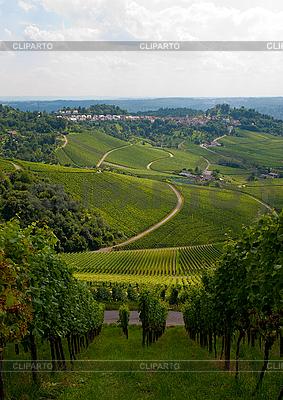 Vineyard in Stuttgart, Germany   High resolution stock photo  ID 3039850
