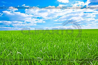 Piękne pole z zielona trawa | Foto stockowe wysokiej rozdzielczości |ID 3040490