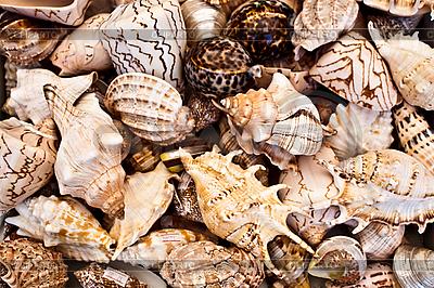 Seashells background   High resolution stock photo  ID 3040515