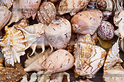 Seashells background | High resolution stock photo |ID 3058195