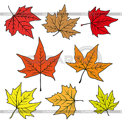 Autumn leaves | Stock Vector Graphics |ID 3073268