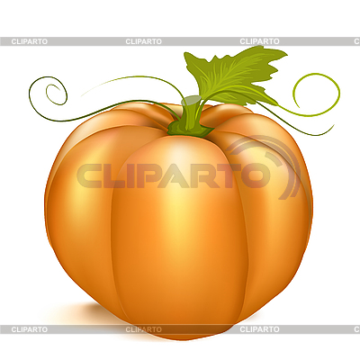 Pumpkin | Stock Vector Graphics |ID 3073856