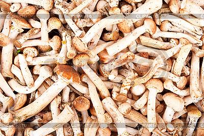 Grzyb Miód | Foto stockowe wysokiej rozdzielczości |ID 3039955
