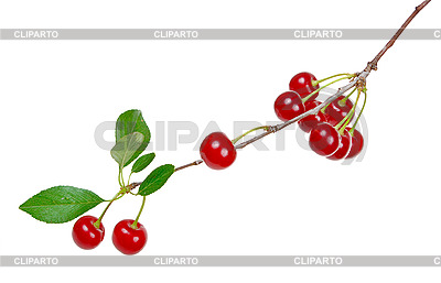 Zweig der reifen Kirschen | Foto mit hoher Auflösung |ID 3040243