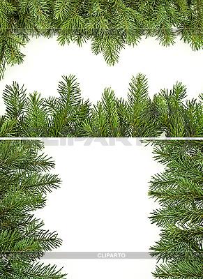 Granice gałęzi sosny | Foto stockowe wysokiej rozdzielczości |ID 3049745