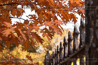 Jesień | Foto stockowe wysokiej rozdzielczości |ID 3080229