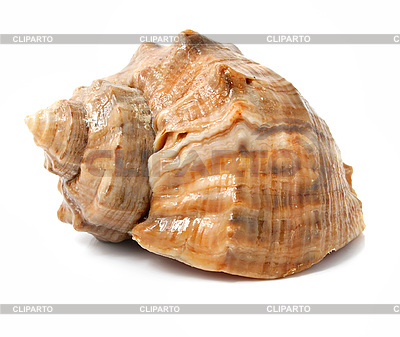 Old sea shell isolated | High resolution stock photo |ID 3040620
