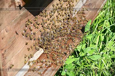 Pszczół w pobliżu ula | Foto stockowe wysokiej rozdzielczości |ID 3042243