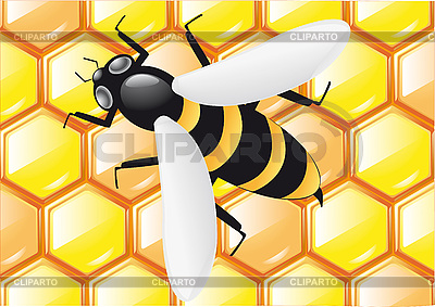 Bee on honeycombs | Stock Vector Graphics |ID 3043838