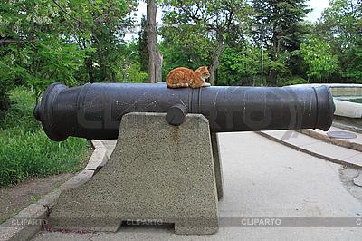 Кошка на пушке | Фото большого размера |ID 3079357