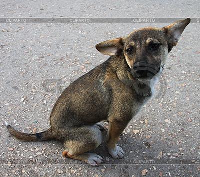 Dog | High resolution stock photo |ID 3079362