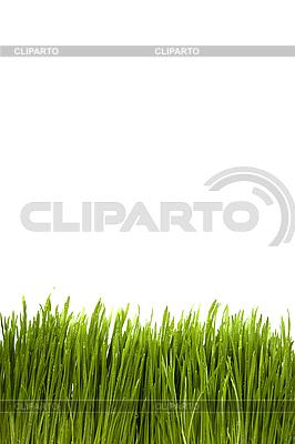 녹색 잔디 | 높은 해상도 사진 |ID 3056470