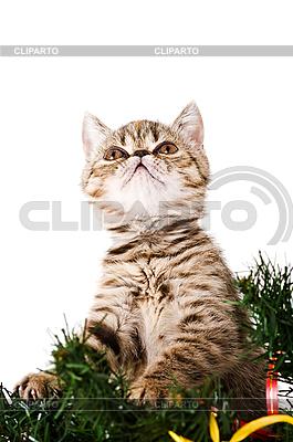 고양이 새끼 | 높은 해상도 사진 |ID 3180771