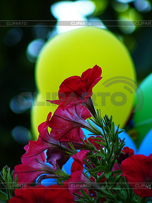 Flowers against an yellow air balloon | High resolution stock photo |ID 3043642