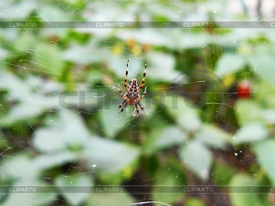 Spider on web | High resolution stock photo |ID 3044003