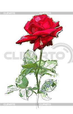 Rote Rose | Stock Vektorgrafik |ID 3058619