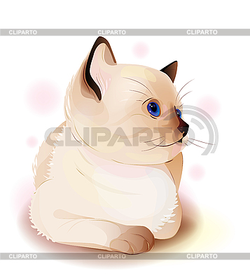 Blue-eyed little Siamese kitten | Stock Vector Graphics |ID 3061245