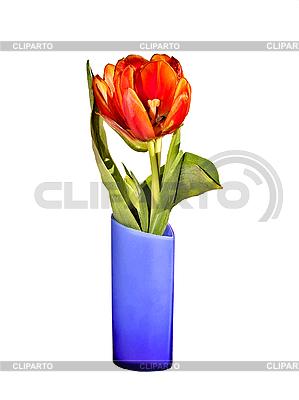 tulpen in der blauer vase foto mit hoher aufl sung cliparto. Black Bedroom Furniture Sets. Home Design Ideas