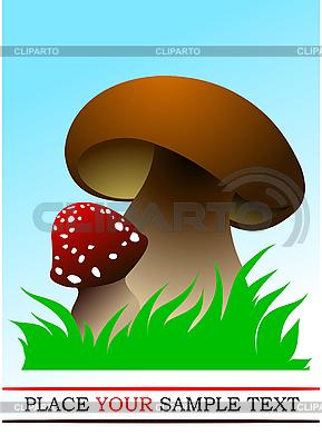 Dwa grzyby | Klipart wektorowy |ID 3048702
