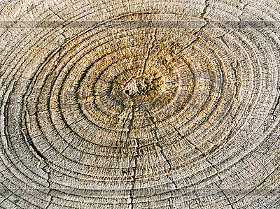 Wood texture | High resolution stock photo |ID 3048505