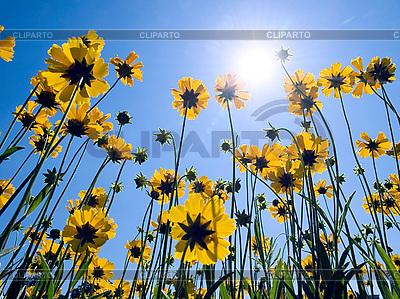 Yellow flowers | High resolution stock photo |ID 3049140