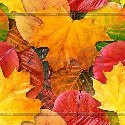 Nahtloser Hintergrund mit herbstlichen Blättern | Foto mit hoher Auflösung |ID 3049248