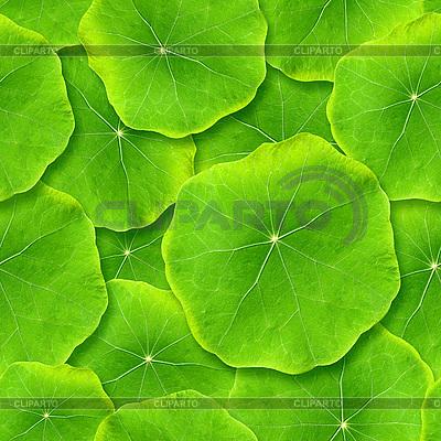 Grüne Blätter | Foto mit hoher Auflösung |ID 3049317
