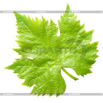 Vine leaf | High resolution stock photo |ID 3049320