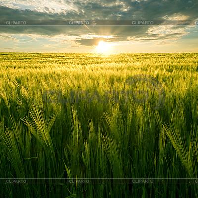 Sonnenuntergang im Weizenfeld | Foto mit hoher Auflösung |ID 3049348