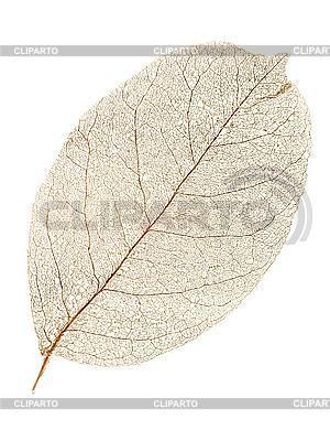 Dry leaf. | 高分辨率照片 |ID 3049421