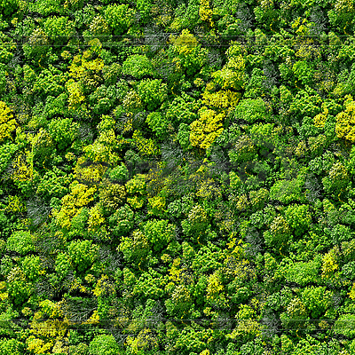 Nahtloses Wald-Muster | Foto mit hoher Auflösung |ID 3049583