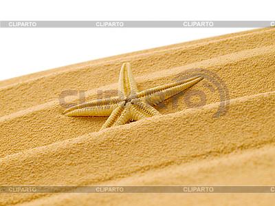 Seestern im Sand | Foto mit hoher Auflösung |ID 3050251