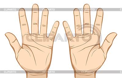 Руки | Векторный клипарт |ID 3051482
