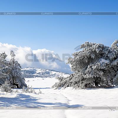 Zimowy krajobraz   Foto stockowe wysokiej rozdzielczości  ID 3117845