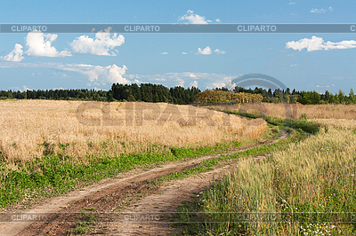 Landscape with road in field of the wheat | High resolution stock photo |ID 3050684