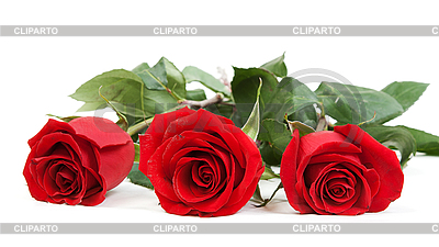 Three red roses | High resolution stock photo |ID 3066459
