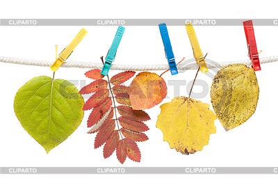 Herbst-Blatt auf Wäscheklammer | Foto mit hoher Auflösung |ID 3307726