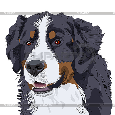 Bernese Mountain Dog breed | Stock Vector Graphics |ID 3058948