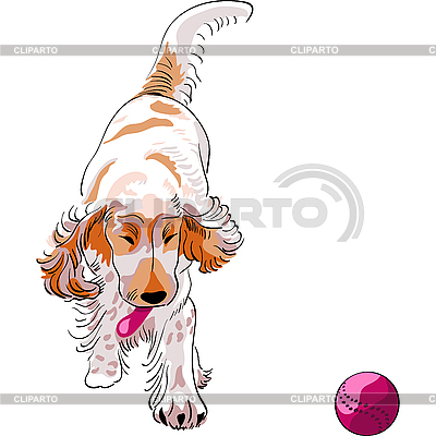 Dog cocker spaniel plays with red ball | Stock Vector Graphics |ID 3058952