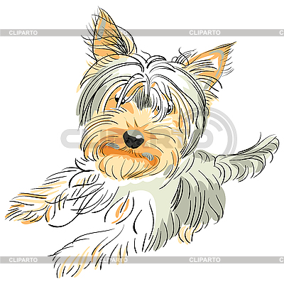 Pedigreed dog Yorkshire terrier | Stock Vector Graphics |ID 3060085