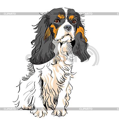 Dog Cavalier King Charles Spaniel | Stock Vector Graphics |ID 3060093