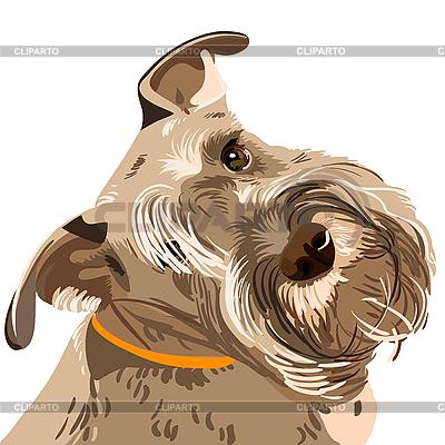 Pies rasy sznaucer miniaturowy | Klipart wektorowy |ID 3060114