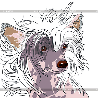 Pies rasy grzywacz chiński | Klipart wektorowy |ID 3060120