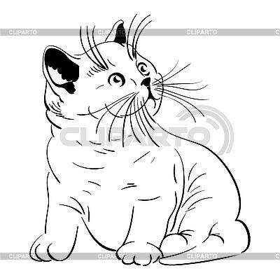 귀여운 작은 솜 털 고양이 | 벡터 클립 아트 |ID 3066712
